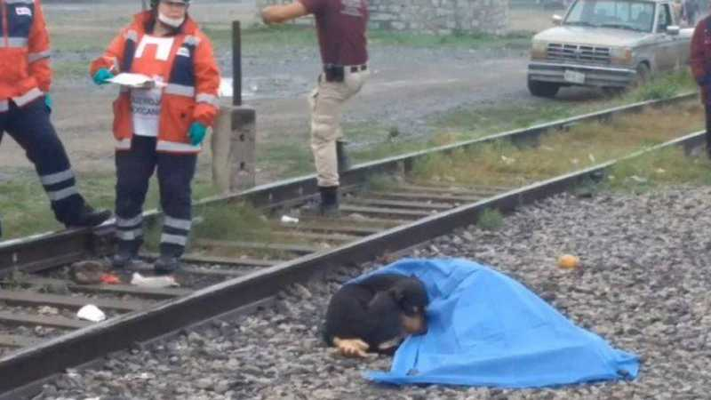 Cão 'vela' o corpo do tutor, morto em linha de trem