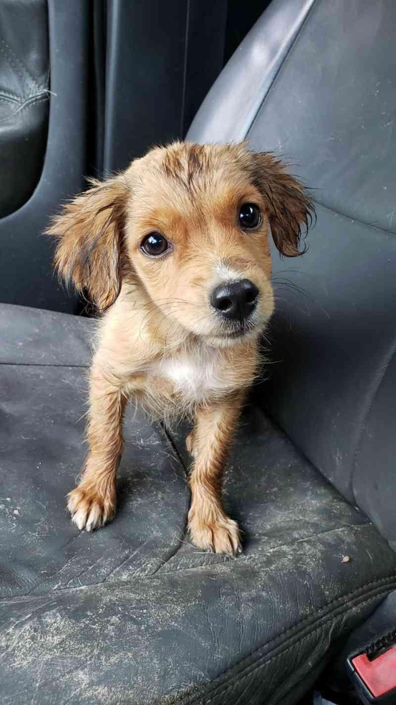 Bombeiros resgatam filhote de cachorro em galeria de água pluvial em Divinópolis, MG — Foto: Corpo de Bombeiros/Divulgação