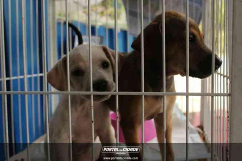Mariana (MG) sanciona lei de maus-tratos contra os animais