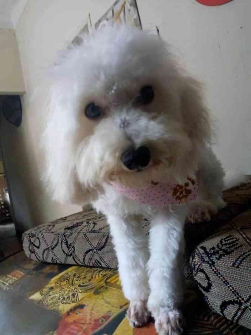 Polícia Civil investiga morte de cachorra atropelada em São João del Rei, MG