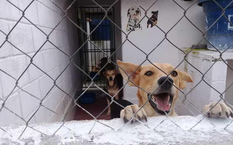 Abrigo de animais em Barbacena (MG) acolhe 140 cães com ajuda de doações