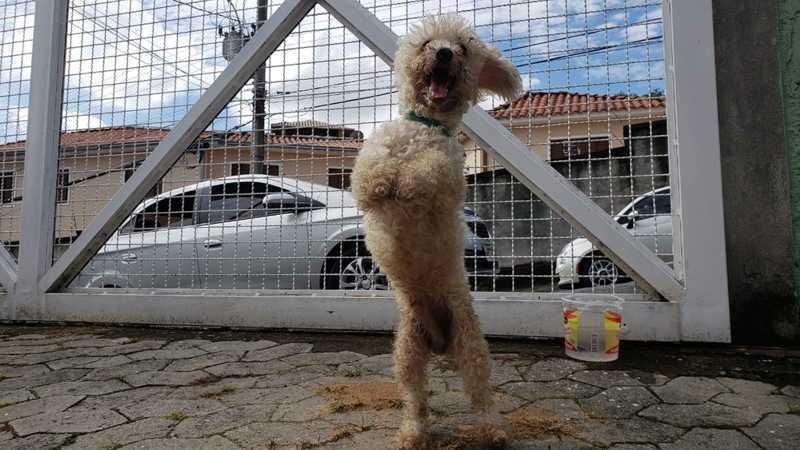 Cachorro é abandonado amarrado às grades de posto de saúde de BH — Foto: Reprodução/TV Globo