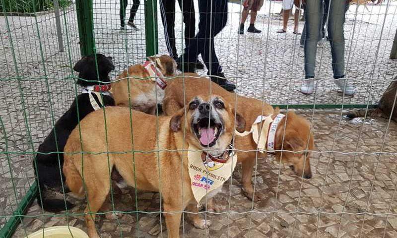 Cães especiais participaram do evento de adoção - oito ganharam um novo lar — Foto: Prefeitura de Juiz de Fora/Divulgação