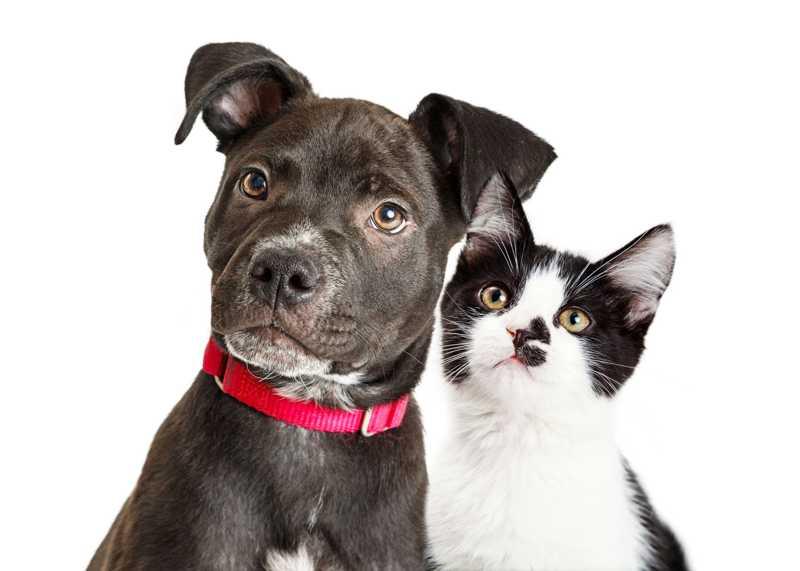 Pet shop deve indenizar cliente se animal foi maltratado, diz Justiça em MG