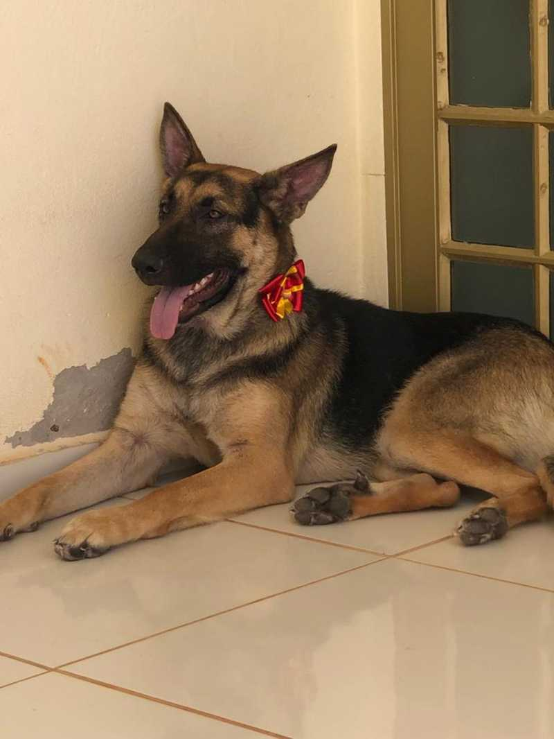 Cadela agredida em Patos de Minas (MG) está em lar temporário
