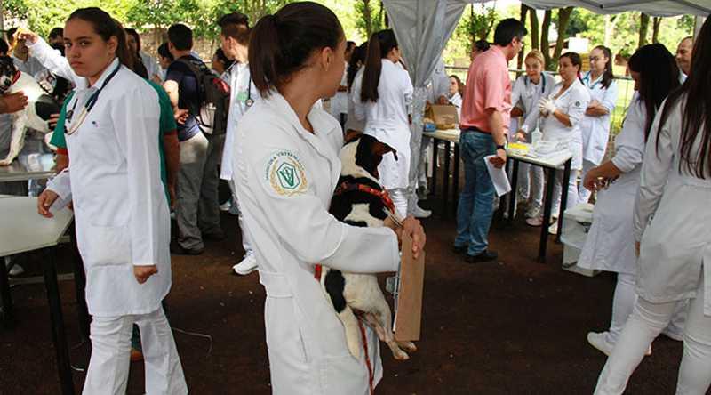 ONG recorre à Justiça, que proíbe castrações farmacológicas em cães em Uberaba, MG