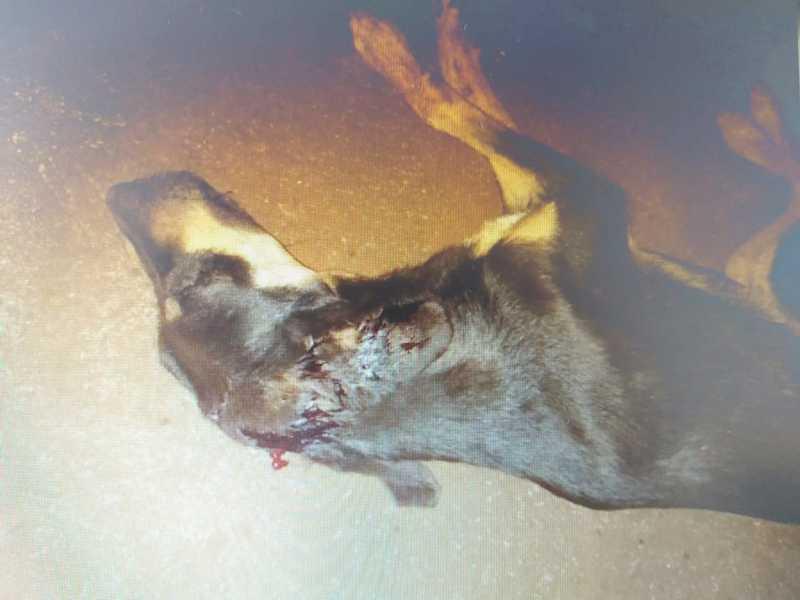 Acusado de agredir cachorro a marteladas é preso pela PM