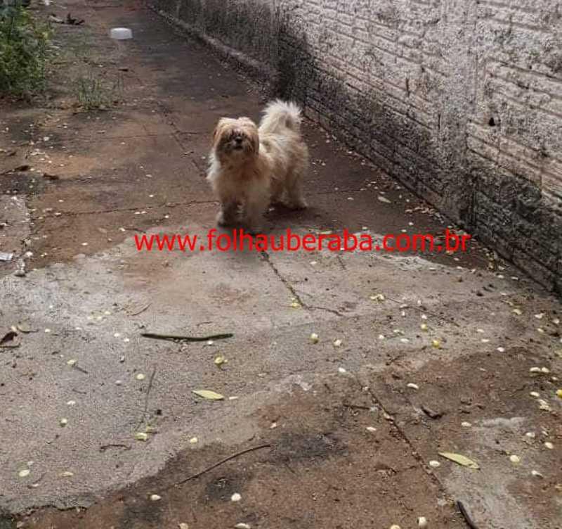 Mulher é detida por suspeita de deixar cão sem água e comida em Uberaba, MG