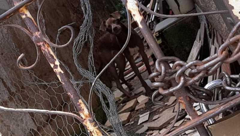 Após denúncia, GCM atende ocorrência de maus-tratos a cachorro em Varginha, MG