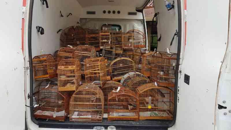 Operação contra tráfico de animais apreende pássaros e prende mais de 20 pessoas na Zona da Mata, em MG