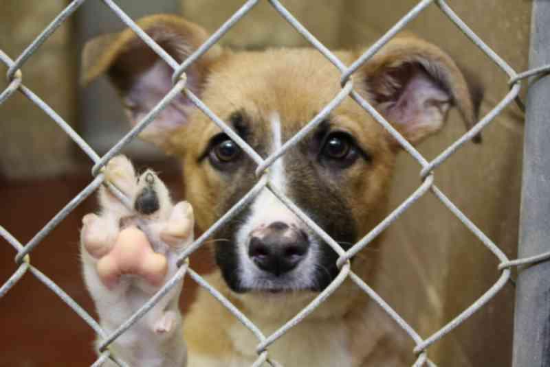 Campanha Abril Laranja: Violência contra animais cresce 39% em Campo Grande, MS