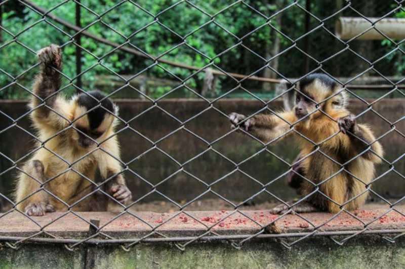 Por falta da mãe, animais em reabilitação podem morrer mesmo após resgate