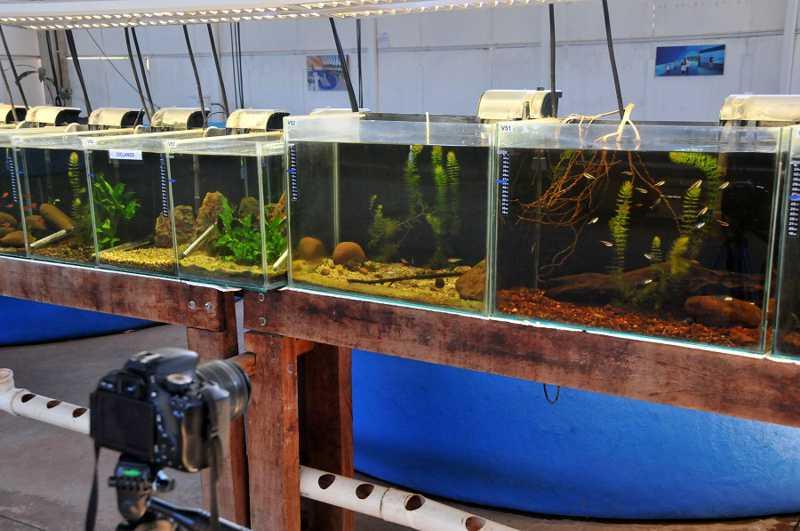 Peixes deveriam ficar em quarentena até término das obras do Aquário - Foto: Valdenir Rezende/CE