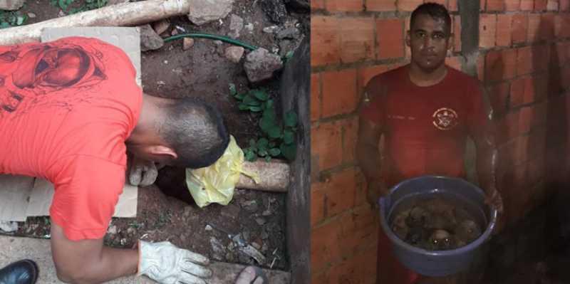 Bombeiros resgatam quatro filhotes de cães que caíram em buraco em Corumbá, MS