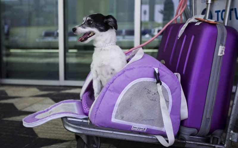 Transporte intermunicipal em MS permite levar cães e gatos, mas é preciso observar regras