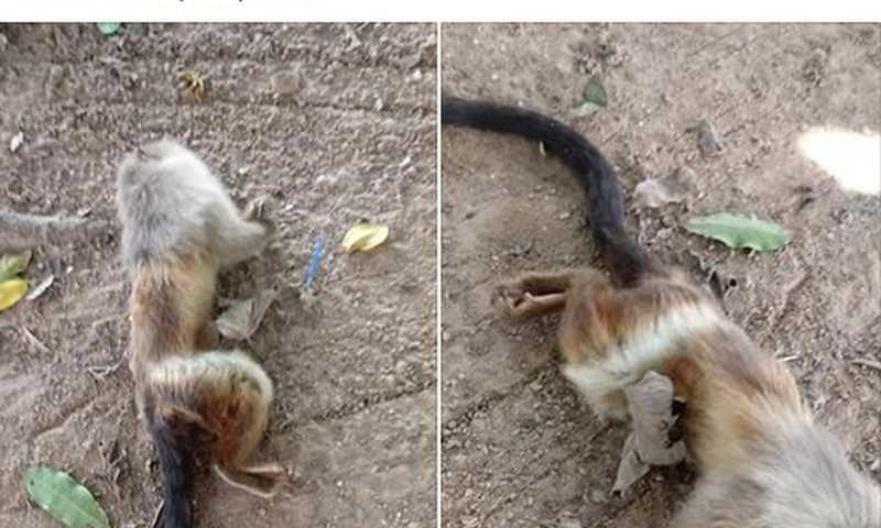 Moradora postou foto de macacos mortos e reclamou do serviço do Centro de Zoonoses — Foto: Facebook/ Reprodução
