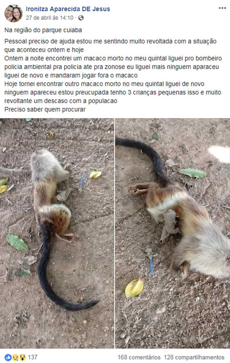Macacos morrem no quintal de casa e moradora é orientada a congelar animais em Cuiabá