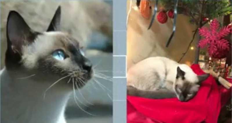 Mortes de gatos por suposto envenenamento são investigadas em Rondonópolis, MT