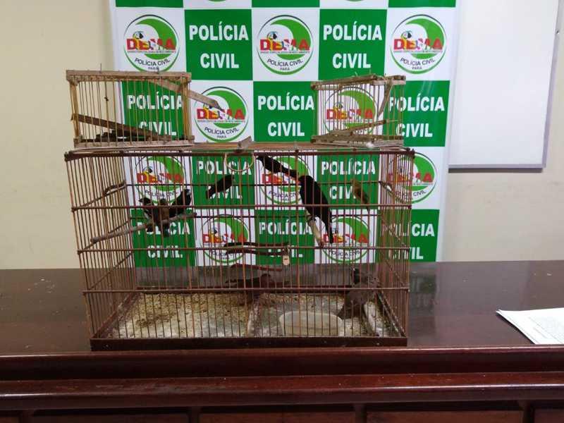 Polícia apreende 10 aves silvestres mantidas em cativeiro dentro de apartamento de luxo, em Belém — Foto: Divulgação / Polícia Civil