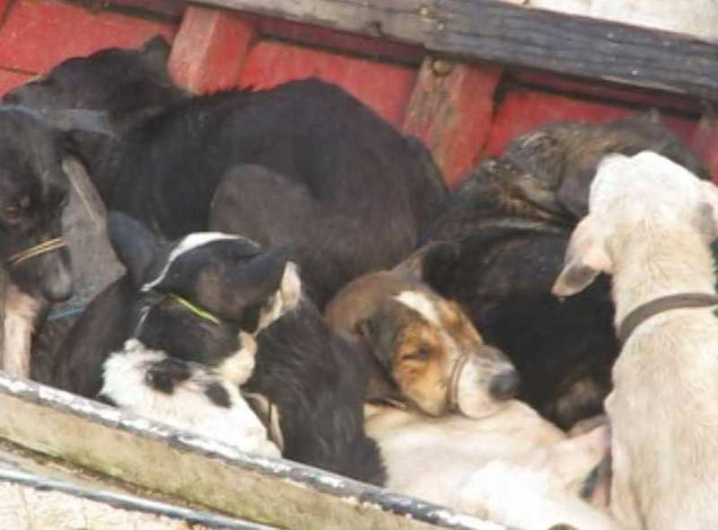 Cães Caçados Prefeito Santa Cruz do Arari Pará — Foto: Reprodução/TV Liberal