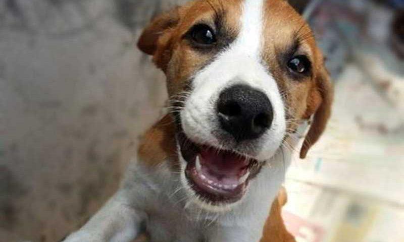 Cães e gatos são beneficiados com o projeto peludinhos da Ufopa — Foto: Divulgação/ Peludinhos da UFPA