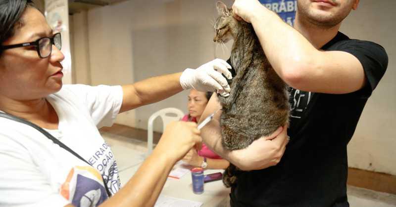Animais receberão atendimentos com veterinário, além de vacinação antirrábica — Foto: Divulgação / Parque Shopping