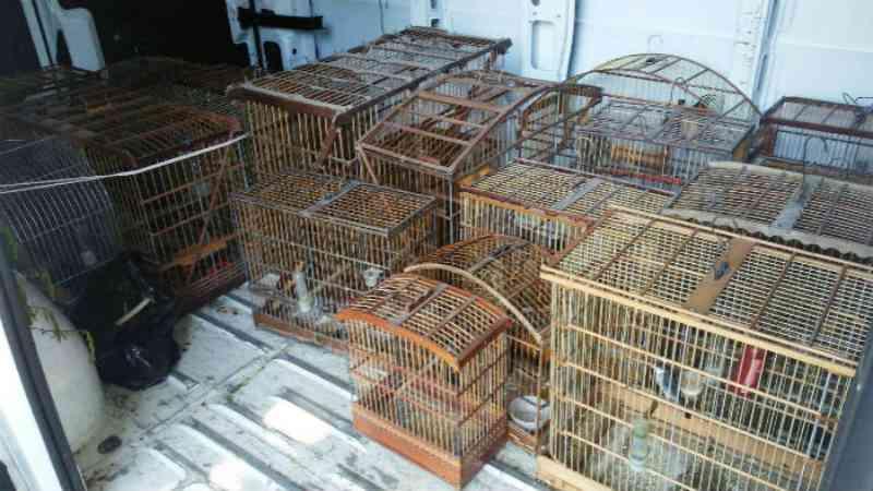 Mais de 40 pássaros são apreendidos em bairros de Paulista e Olinda, em PE