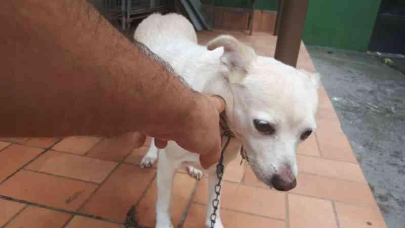 Mulher abandona cadela em clínica veterinária e deixa bilhete no Recife, PE