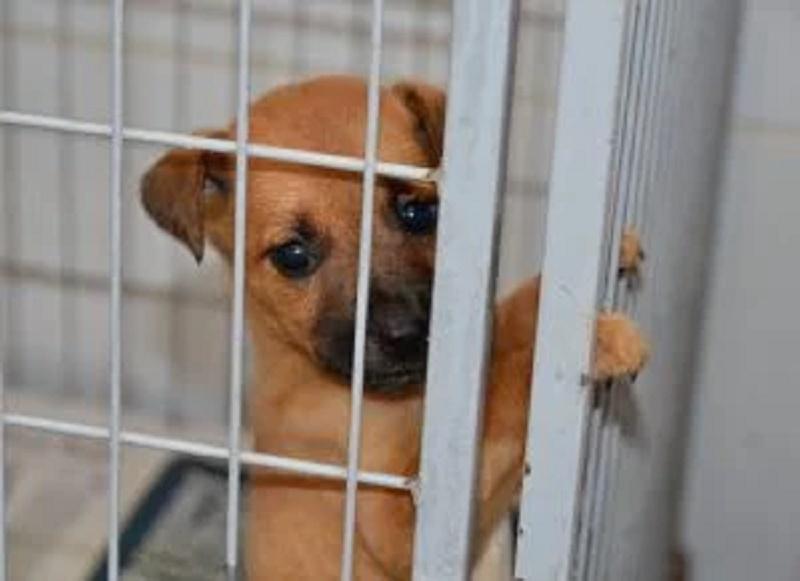 Prefeitura recebe mais de duas mil denúncias de maus-tratos a animais em Recife