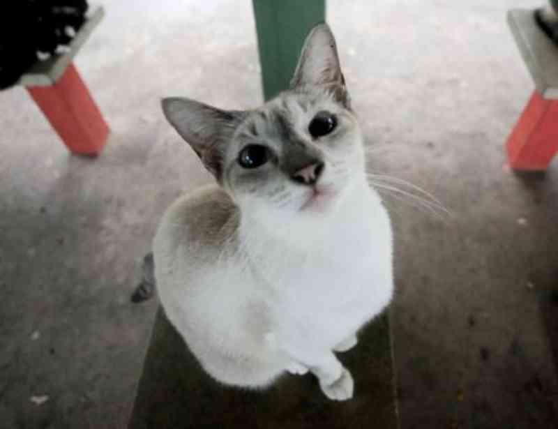 Vereadores cobram câmeras onde gatos foram envenenados no Recife, PE
