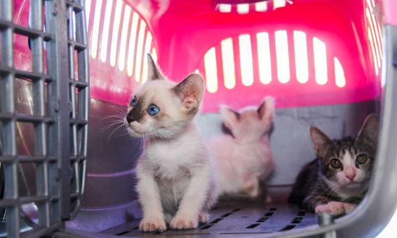 Campanha 'Abril Laranja', mês da prevenção de maus tratos contra animais. — Foto: Alexandre Justino