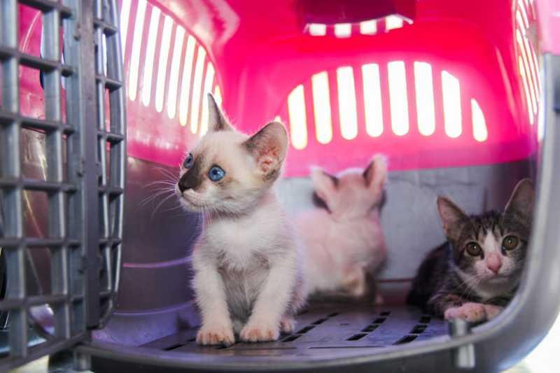 Combate aos maus-tratos contra animais é tema de evento em Petrolina, PE