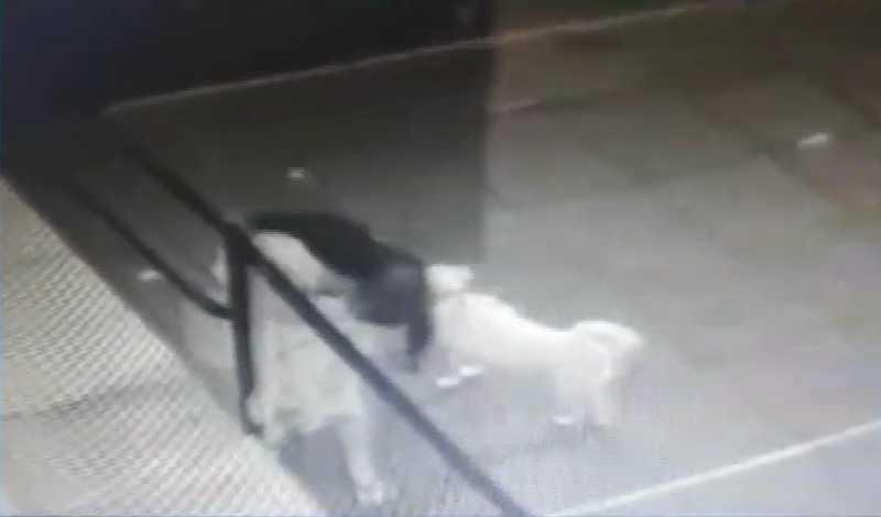 Polícia tenta identificar mulher que abandonou cadela na Torre, no Recife