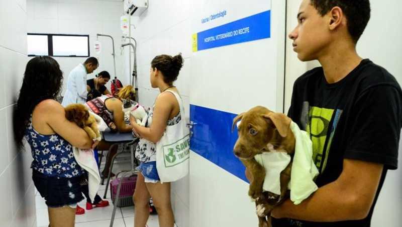 Hospital Veterinário do Recife muda telefones para agendamento de consultas e castrações