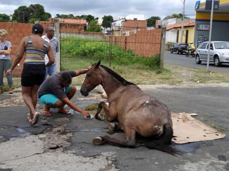 Égua é atropelada por carro em Teresina (PI) e espera horas por socorro