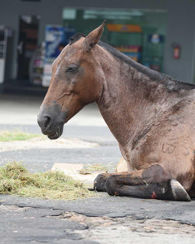 Sem amparo de políticas de proteção, animais de rua são sacrificados em Teresina