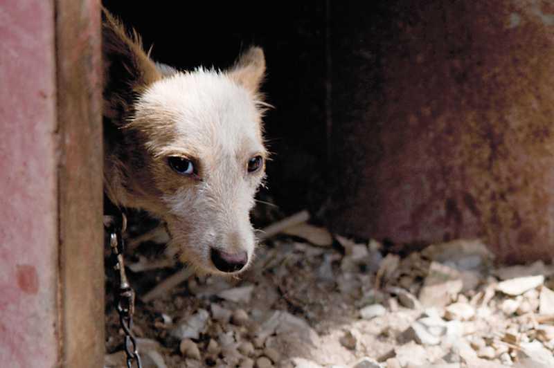 Portugal: GNR salva 15 cães vítimas de maus-tratos todos os meses