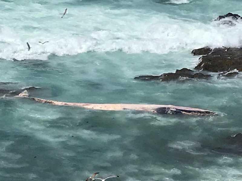 Baleia morta dá à costa em Sines, em Portugal