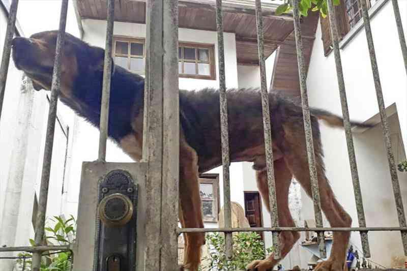 Cerca de 200 animais são resgatados em situações de maus-tratos em três meses, em Curitiba, PR