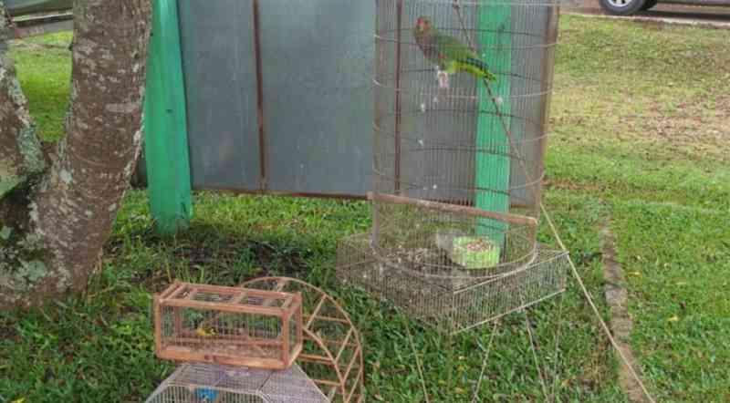 Polícia Ambiental apreende pássaros sem registro em Guarapuava, PR