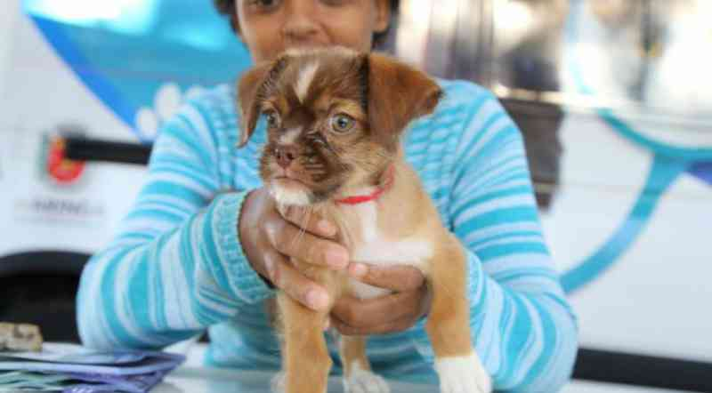 Maringá (PR) registra oito casos de violência contra cães e gatos por dia