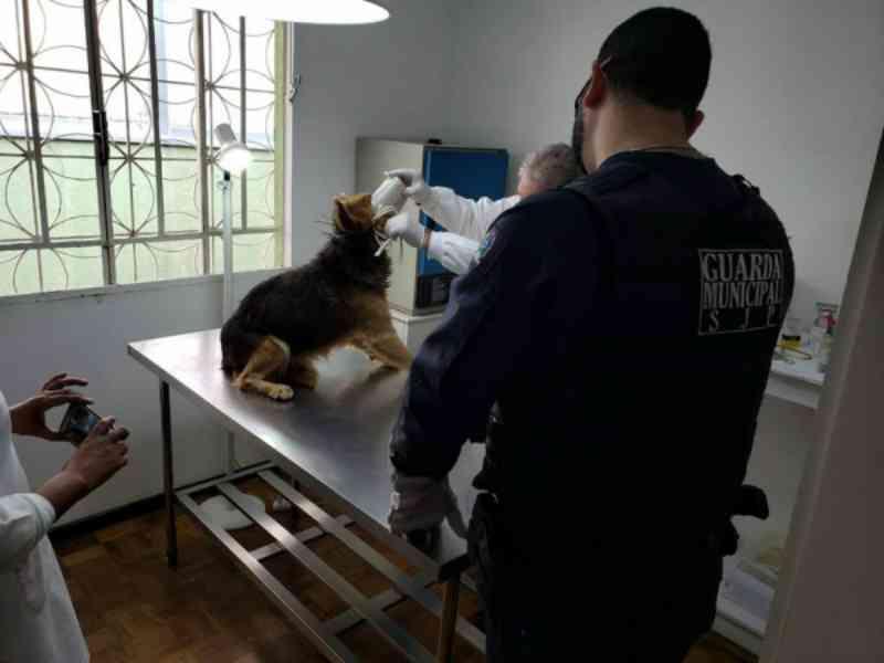 Guardas salvam cachorro que agonizava amarrado em poste em São José dos Pinhais, Curitiba, PR