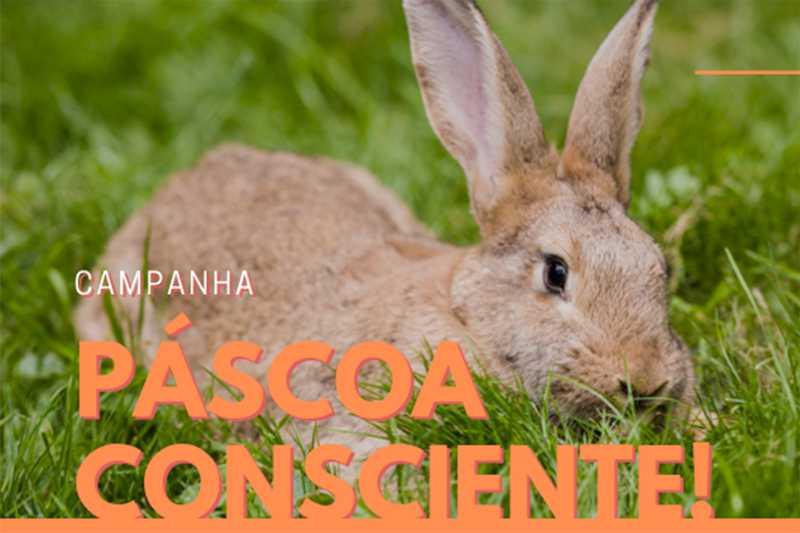 Campanha conscientiza sobre compra de coelhos vivos na Páscoa