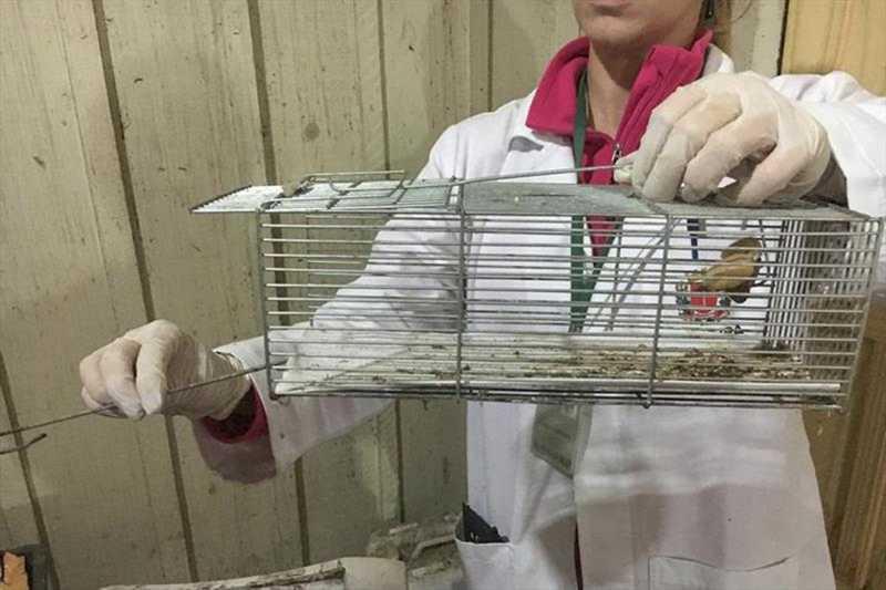 Dezenas de pássaros silvestres são apreendidas em uma casa, em Curitiba