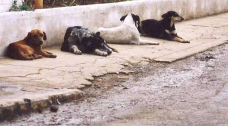 CCZ realiza levantamento de cães de rua até 26 de abril em Foz do Iguaçu, PR