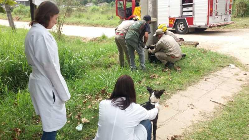 Cães são resgatados de dentro de bueiro em Pinhais, PR