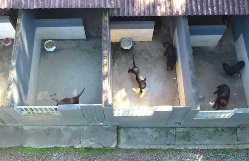 Policiais encontram canil clandestino e prendem suspeito de maus-tratos a animais, em Piraquara, PR