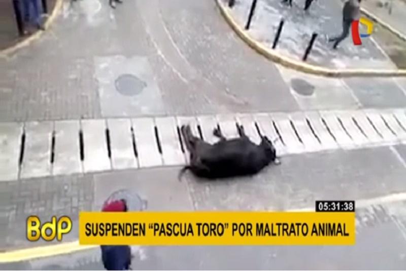 Touro é arrastado pelas ruas durante o 'Jala Toro' e causa Indignação no Peru