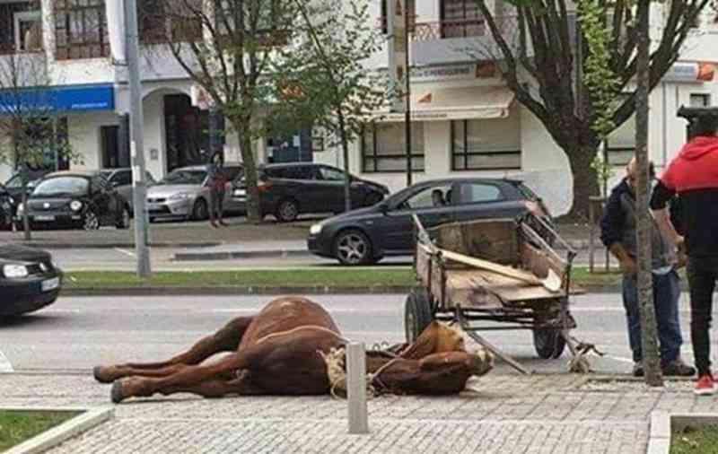 Portugal: imagens de cavalo inanimado em avenida de Viseu geram indignação