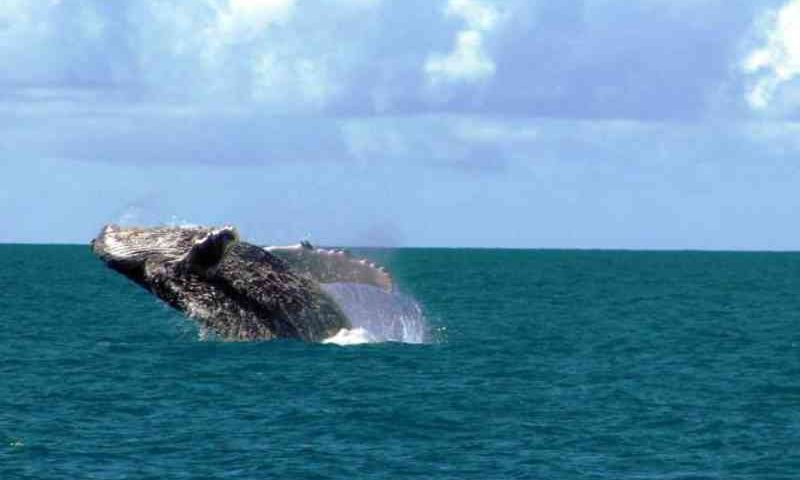Destruidor: presidente do Ibama rejeita análise e autoriza extração de petróleo próximo a Abrolhos